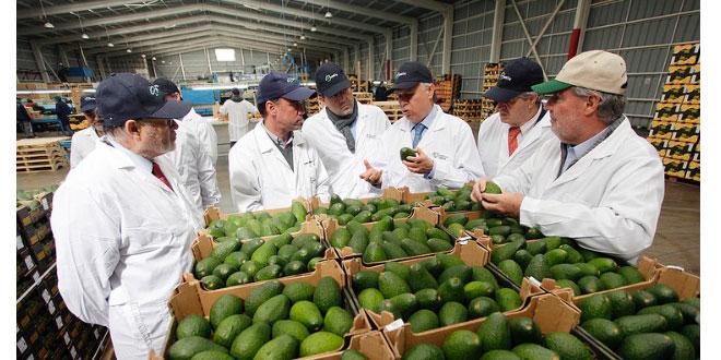 Chile podrá exportar más frutas y paltas a China