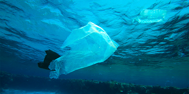 Plásticos biodegradables no solucionan contaminación del océano