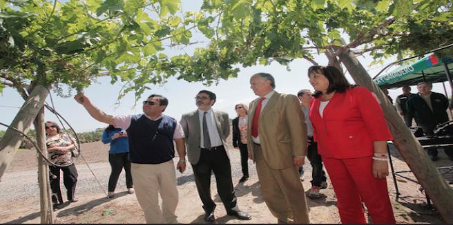 Chile recupera condición de país libre de Mosca de la Fruta