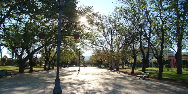 Estudio de la U. de Talca ratificó el valor ecosistémico del arbolado urbano