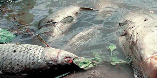 WWF: 114 sitios del patrimonio mundial están amenazados