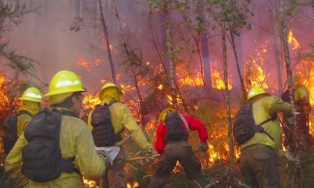 Incendios forestales en Chile: hacia una cultura de la prevención