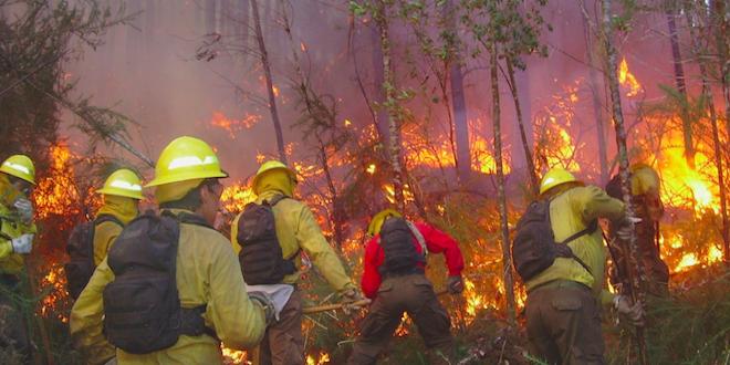 Conaf informa disminución de incendios forestales en Chile
