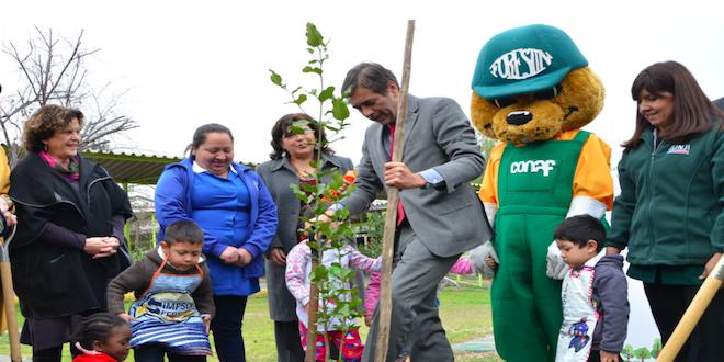 Prometen plantar 3.000 árboles nativos en jardines infantiles
