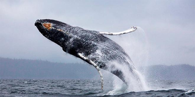 Sernapesca: capacitación sobre avistamiento de mamíferos marinos