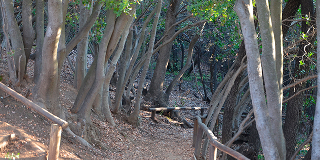 Todo listo para el primer Parque Nacional de la Región Metropolitana