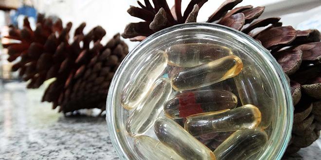 Proyecto usa aceite de semilla de pino contra obesidad y diabetes
