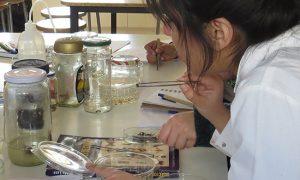 Universidades del CRUCh en alerta por reducción de presupuesto para ciencia y tecnología