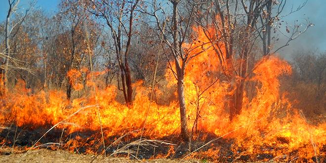 Operativo de salud por incendios forestales en O'Higgins