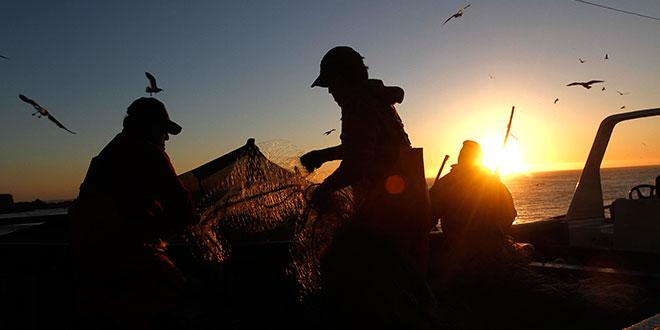 Oceana cuestiona a Subpesca por aumentar cuota anual de merluza común