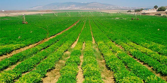 Las consecuencias de la lluvia veraniega en el sector agrícola