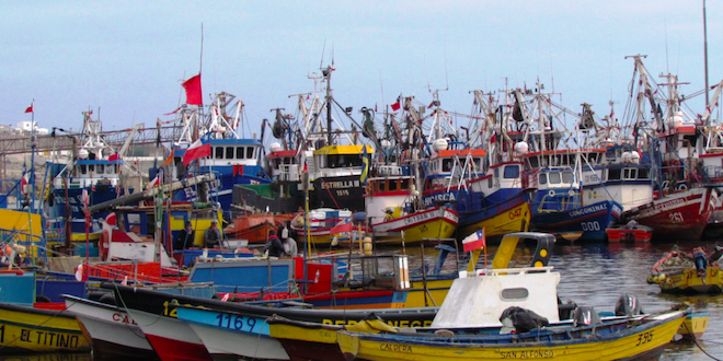 Subpesca: avanza recuperación de merluza común y congrio dorado