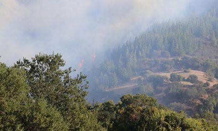 Monitorean avance de dos incendios en la Región de O'Higgins