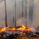 Entregan plan para restaurar patrimonio afectado por incendios forestales