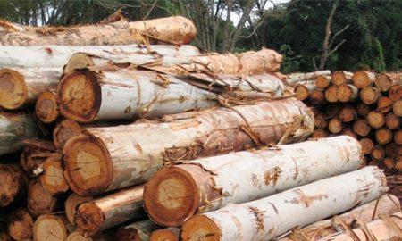 Crean fondos de inversión por US$ 120 millones para pymes madereras afectadas por incendios