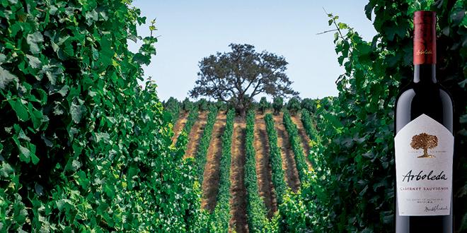 Descorcha un vino y planta un árbol nativo