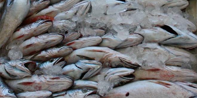 Oceana pone voz de alerta tras informe que muestra crítico estado de pesquerías chilenas