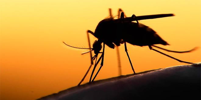 Zika registra nuevos casos en Sudamérica