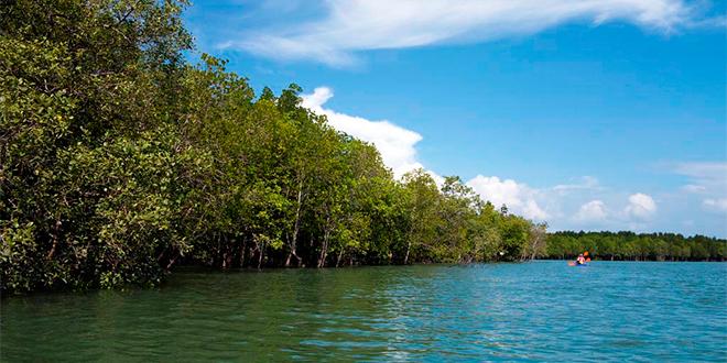 ¿Por qué son importantes los manglares?