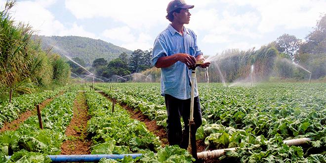 Regiones agrícolas de Chile buscan adaptarse al cambio climático