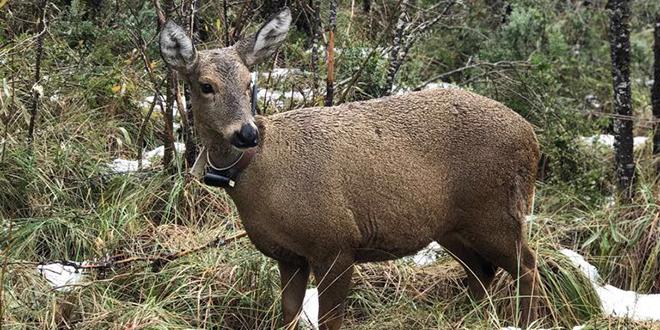 Impulsan proyecto que protegerá a especies amenazadas