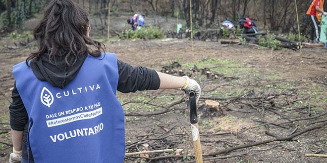 Fundación Alstom financiará proyecto de reforestación en Rinconada de Maipú