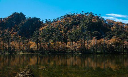 Santuario El Cañi: ejemplo de conservación, educación y turismo