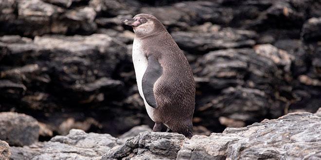 Oceana se hace parte en Tribunal Ambiental de Antofagasta en rechazo a Dominga