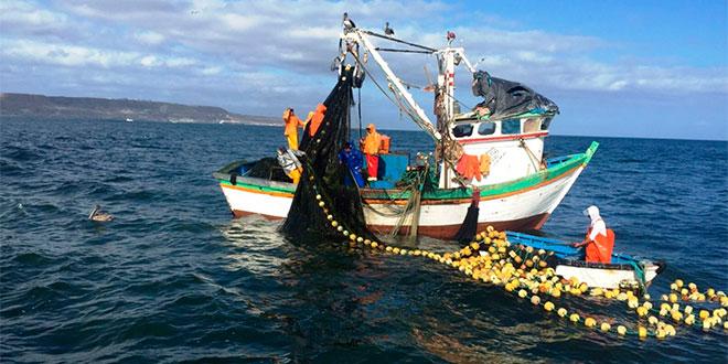 Modernización de Sernapesca es urgente para combatir pesca ilegal