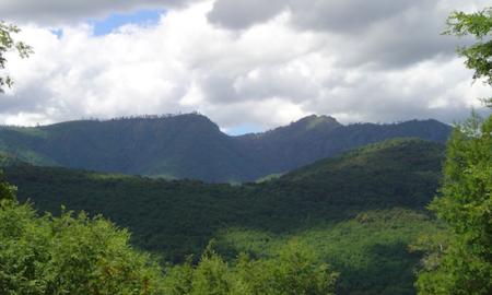 Destacan estrategia de Chile por cambio climático y recursos vegetaciones