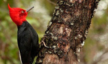 Red de Parques Patagónicos protegerá especies amenazadas únicas en el mundo