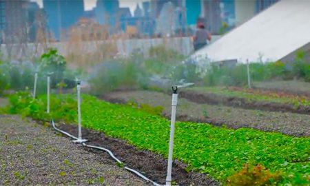 La agricultura urbana en Nueva York
