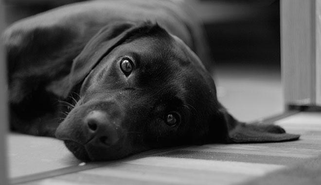 ¿Qué hacer frente al envenenamiento o intoxicación de tu perro?