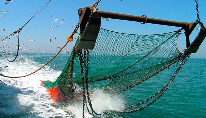 Oceana rechaza acusaciones de industriales pesqueros