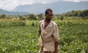 Más de 10.000 migrantes trabajan en el agro chileno
