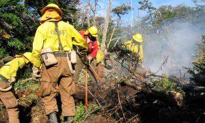 Los desafíos para las nuevas autoridades forestales
