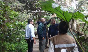 Banco de semillas y laboratorio de germinación preservarán flora nativa de Juan Fernández