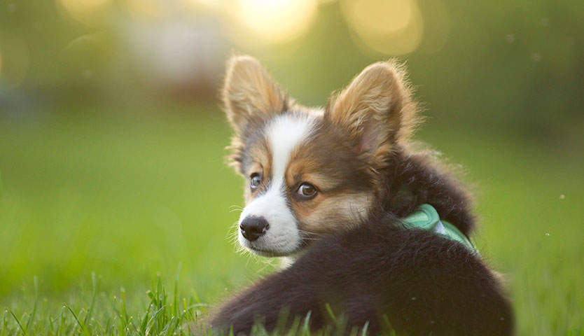 Guía para registrar a tu mascota