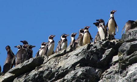 Senadora Allende: Proyecto Dominga lesionaría Reserva de Pingüinos de Humboldt