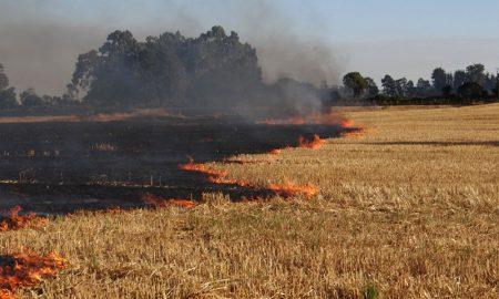 Crean software para monitorear quemas agrícolas y forestales