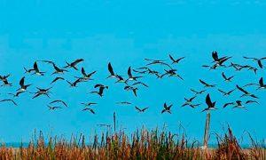 Por un mundo más seguro para las aves migratorias