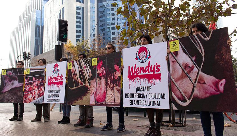 Bienestar animal: exigen política de sostenibilidad a Wendy's
