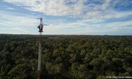 Medición de CO2 en bosque nativo de Chile revela alta sensibilidad a cambios climáticos