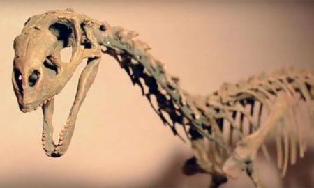¿Qué tipo de dinosaurios hubo en Chile?