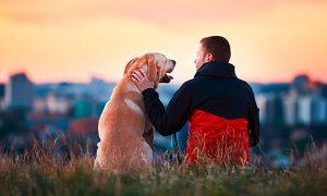 ¿Por qué es importante la tenencia responsable de mascotas?