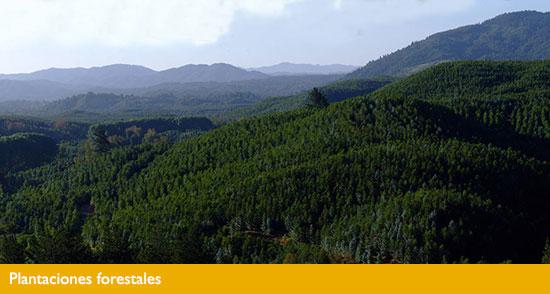 """Seremi de Economía: """"El presente y el futuro de la Araucanía es el turismo"""""""