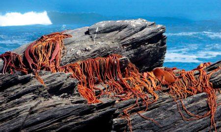 Hasta noviembre se prohíbe extracción de cochayuyo en Región del Maule