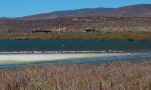 3 humedales de Tongoy fueron declarados Santuario de la Naturaleza