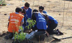 Reforestan con más de 2.400 árboles nativos zona de Rinconada de Maipú