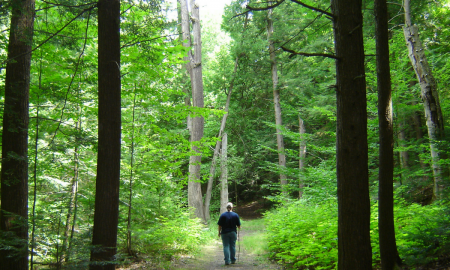 9 cosas que deberías saber sobre los bosques